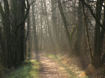 Zonnestralen op het pad in natuurgebied Friescheveen