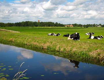 Kerkje Midwolde en landschap Westerkwartier