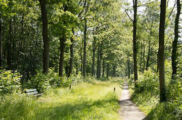 Het minder bekende bos bij Roden: Maatlanden en Natuurschoon Nietap (6km)