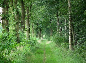 Boswandeling Slotplaats en Oude Bosch, Bakkeveen (7km)