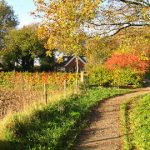 Door de geschiedenis rond Noordlaren (7,5km)