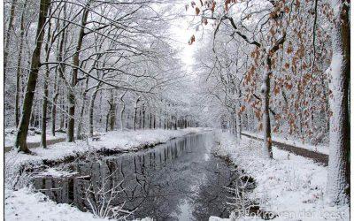 Winterwandeling Mensingebos