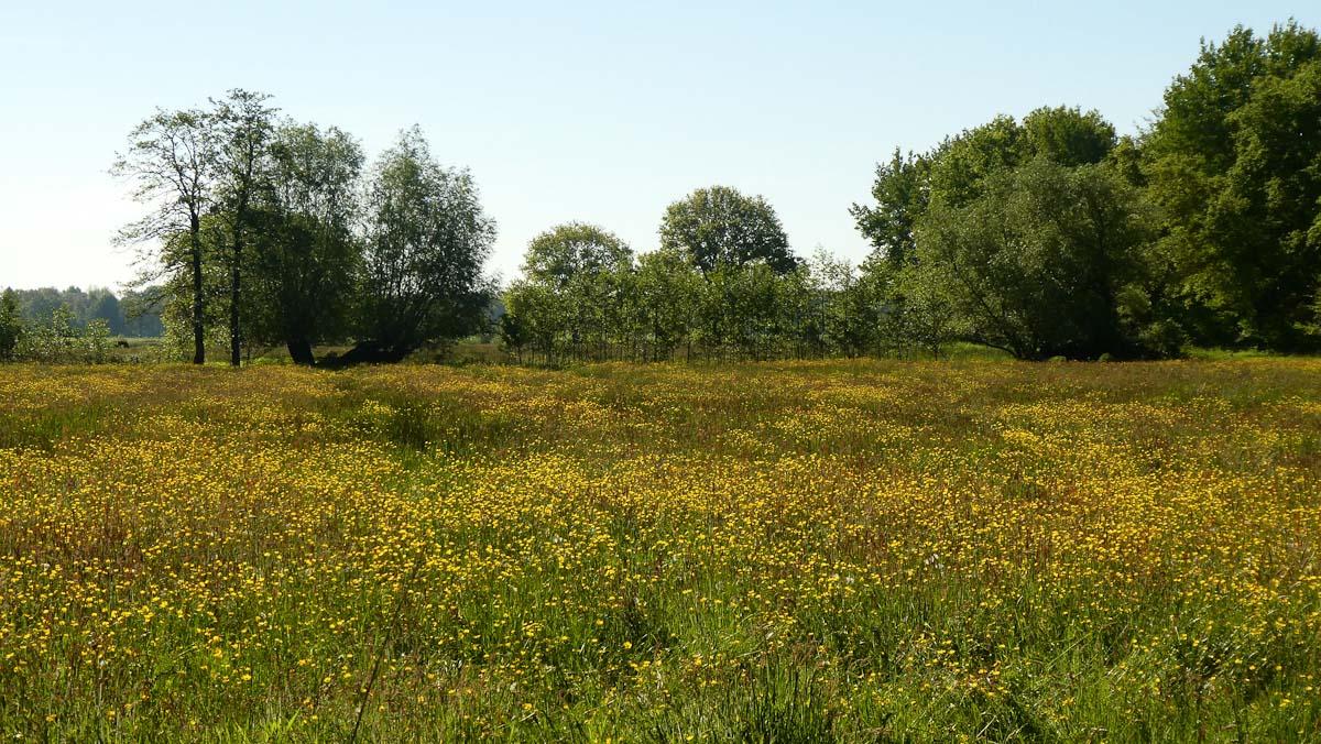 9 Bloeiende velden