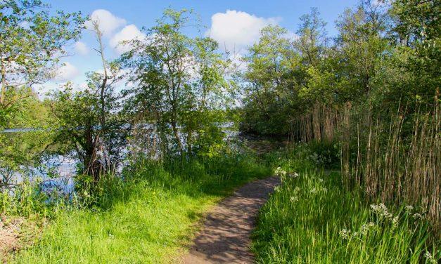 Natuurgebied Friescheveen (4km)